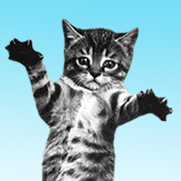 CAT BOUNCE!